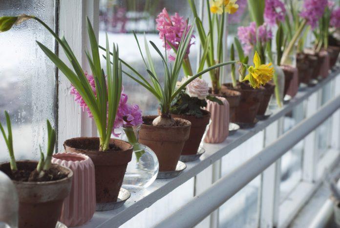 Jak rozpoznać chorujące kwiaty?