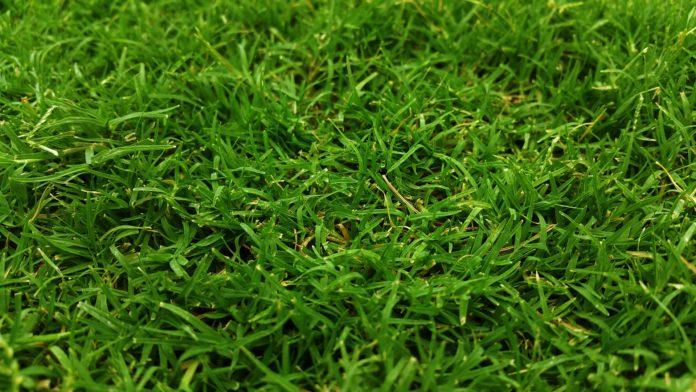 Piaskowanie trawnika, czyli wiosenna pielęgnacja ogrodu