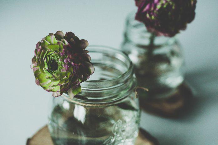 Ogródek w słoju – zakładanie i pielęgnacja