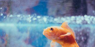 Twoje pierwsze akwarium może być gotowym zbiornikiem z wyposażeniem